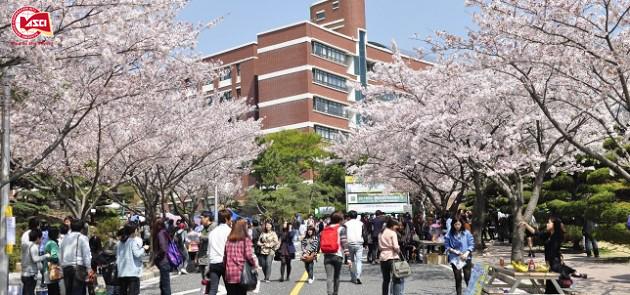 3 ngành học không nên bỏ lỡ khi du học Hàn Quốc