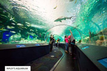 14-ripleys-aquarium-toronto