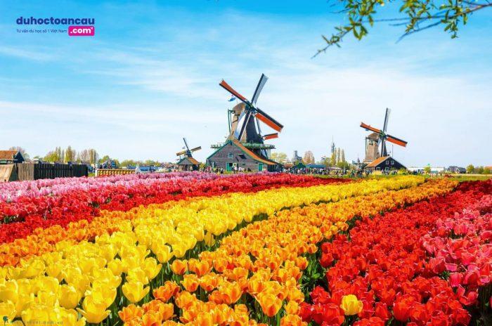 Hà Lan luôn được biết đến như một đất nước xinh đẹp với những chiếc cối xay gió khổng lồ và vườn hoa Tulip bạt ngàn.